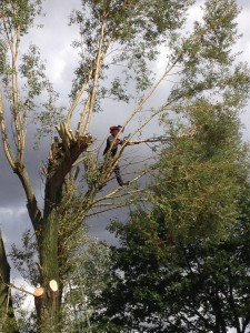 Tree Surgeon Maldon