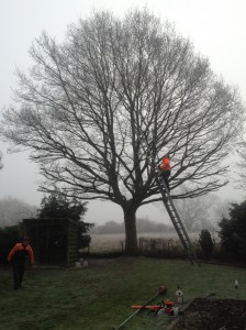 Tree Surgery Maldon